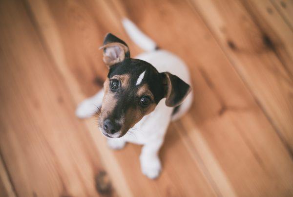 A cute dog on a wooden floor