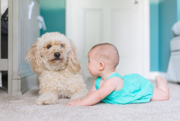 A cute puppy in a lush carpeted floor, next to an adorable baby who yet cant walk